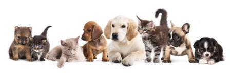 子犬と子猫の猫と白い背景の前に犬のグループ