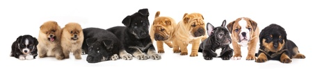 다른 품종의 강아지의 그룹 스톡 콘텐츠