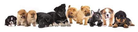 Groep van Puppies van verschillende rassen