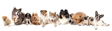 Group of dogs 스톡 콘텐츠
