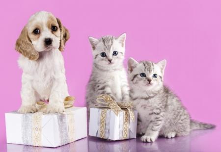 子犬と子猫 写真素材