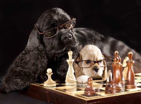 dog with glasses playing chess photo