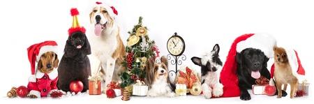 산타 모자를 쓰고 개들.