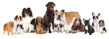 Groep van honden zitten in de voorkant van een witte achtergrond