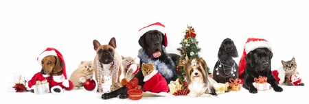 dog and  cat and kitens  wearing a santa hat Imagens