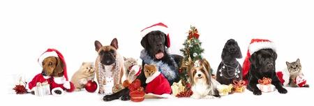perro labrador: perro y gato y kitens que llevaba un sombrero de santa
