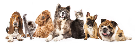 Group of dogs and cat different breeds, cat and dog photo