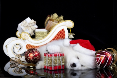 white puppy sleeping with a gift in paws photo