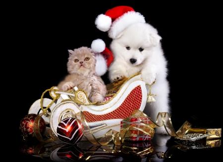 White dog spitz  and kiten Persian  wearing a santa hat, kiten and puppy