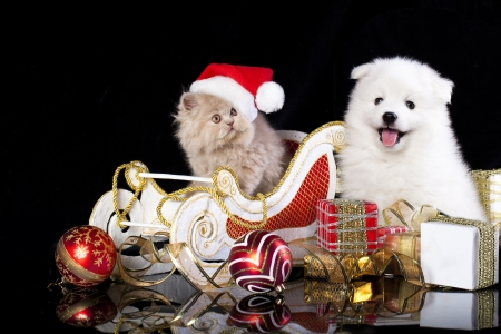 labrador christmas: White dog spitz  and kiten Persian  wearing a santa hat, cat and dog Stock Photo