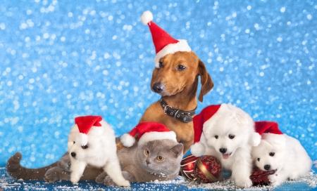 hond en kat en kitens met een kerstmuts Stockfoto