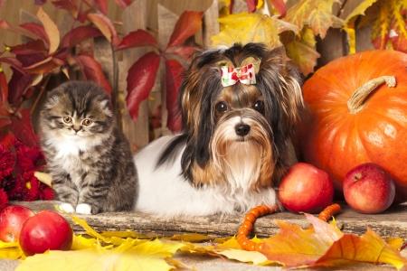 ビーバーのヨークシャー テリアと子猫