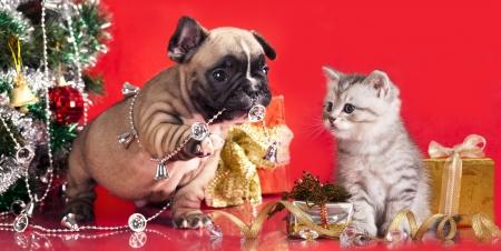 happy holidays: kitten en puppy, vakantie decoraties Stockfoto