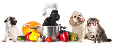 dog food: dog in chef Stock Photo