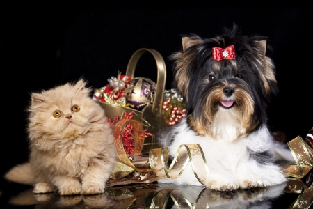 kitten and puppy with Christmas decorations