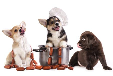 スモーク ソーセージと犬 写真素材
