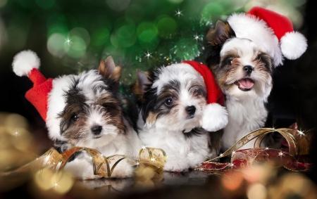サンタ帽子をかぶっている子犬