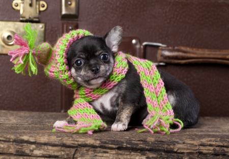 vistiendose: cachorro que llevaba un gorro de lana