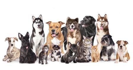 개와 흰색의 앞에 앉아 고양이의 고양이와 개, 그룹 스톡 콘텐츠