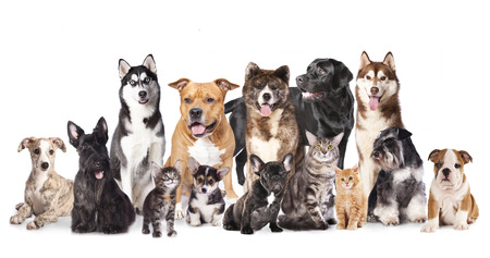 Cat and dog,Group of dogs and cats  sitting in front of a white