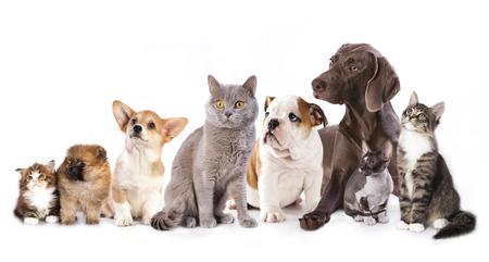흰색, 고양이와 개에 고양이와 강아지의 그룹