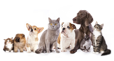 Group of cats and dogs in  white , cat and dog