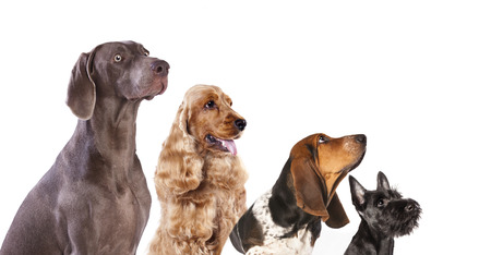 group of dogs is looking up Banque d'images