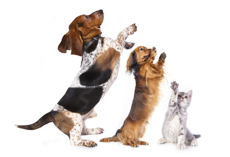 group of dog standing on hind legs