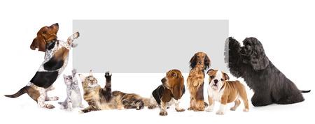 コルクのバナーを保持している犬と猫