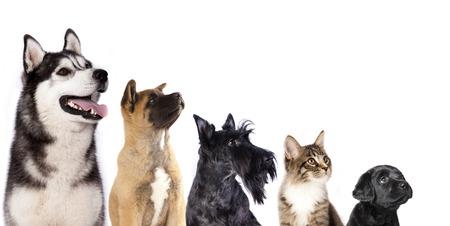猫と犬は、犬探して子猫のグループ 写真素材