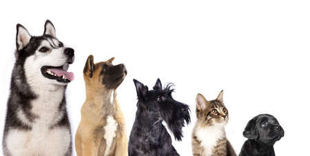 food on white: Cat and dog, group of dogs and kitten  looking up Stock Photo