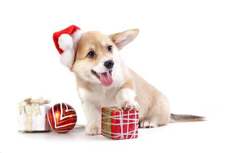 puppy in a Santa Claus hat and present Standard-Bild