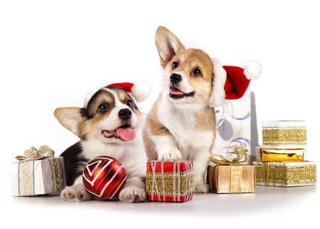 puppy in a Santa Claus hat and present Banque d'images