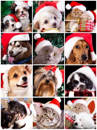 산타 모자와 함께 새끼 고양이 및 강아지