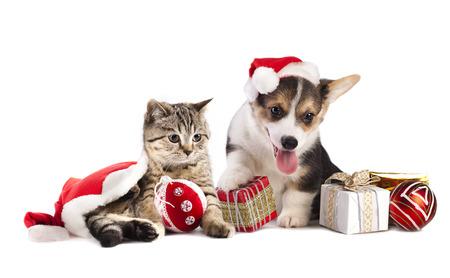 kerst interieur: hond en kat en kitens met een kerstmuts Stockfoto