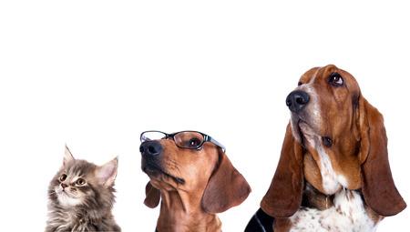 犬と猫のグループ見る upin 白背景