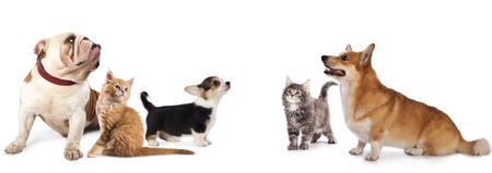 group  of dogs and  cat  look upin white background