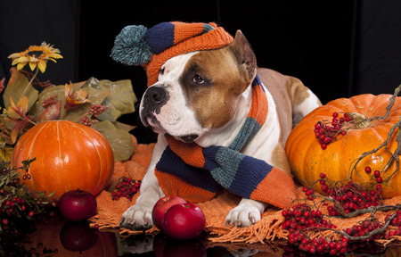 dog knitted hat and scarf, photo