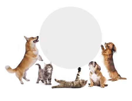 big five: gatti e cani in possesso di un banner di sughero Archivio Fotografico