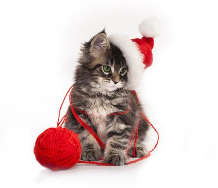 animal pussy: kitens  a santa hat