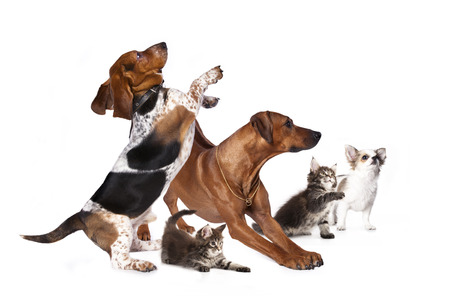 犬子猫と、後ろ足で立って、子猫お探しのグループ 写真素材 - 33639925