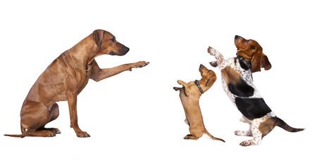 立っている犬のグループ 写真素材