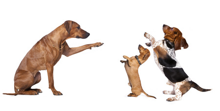 obedecer: grupo de perro de pie