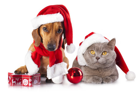 dog and cat and kitens wearing a santa hat Фото со стока