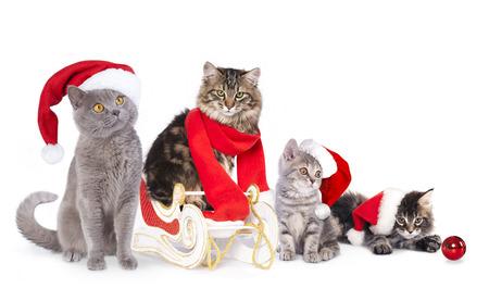 housepet: cat  a santa hat