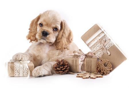 子犬とヴィンテージのギフト ボックス 写真素材