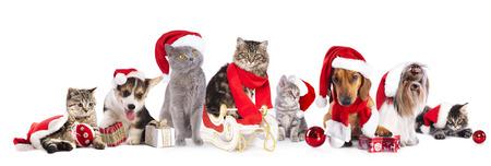 estaciones del a�o: Gato de la Navidad y el perro Foto de archivo