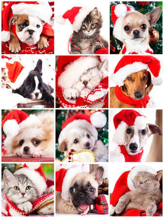 kitten and puppy with santa hats photo