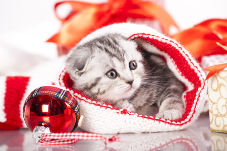 kitten christmas Stock Photo