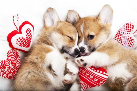 お互いの腕の中の2匹の子犬